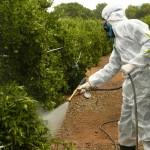 Decreto por el que se desarrollan aspectos administrativos relativos a los productos fitosanitarios en la Comunitat Valenciana